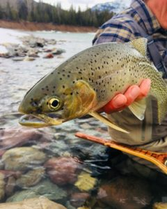 Great Northern Montana FLy Fishing