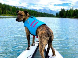 Bisou Dog on paddleboard with life jacket
